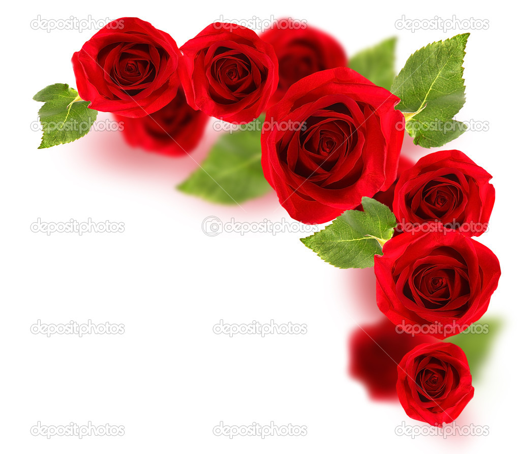 Fresh red roses border isolated on white background — Stock Photo #5203731