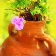 Stock Photo: Pink spring flower in the pot