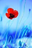 Prado de flores de amapola — Foto de Stock