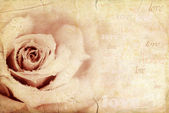 Grungy rose background — Stock Photo