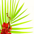 Palm leaves and red orchid - Stock Photo