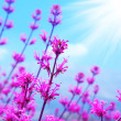 Spring flower background — Stock Photo