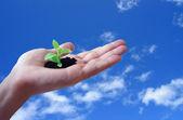 Green ecology concept — Stock Photo