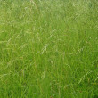 GreenGrass Texture - Stock Photo