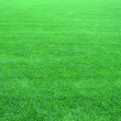Fresh green grass - texture — Stock Photo