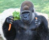 Gorilla — Stockfoto