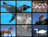 Tiere — Stockfoto