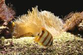 Tropical fish — Stock fotografie