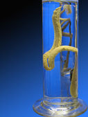 Cylinder with displays of worm — Stock Photo