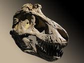 Skull fossil dinosaur — Stock Photo