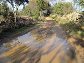 Road with puddle — Stock Photo