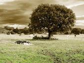 オークと馬 — ストック写真