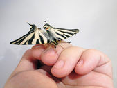 Butterfly put with confidence in a hand — Stock Photo