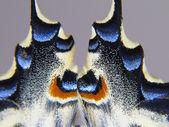 Alas de una mariposa en macro para fondo o textura — Stock Photo