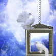 Stock Photo: Peace dove 2