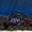 Stock Photo: Oceanworld 4