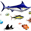 Stock Photo: Fish species