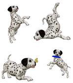 ダルメシアン子犬 2 — ストック写真