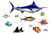 Vissoorten — Stockfoto
