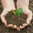 Stock Photo: Soil with plant in humhands