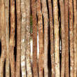 Trunks wooden wall in rainforest jungle house — Stock Photo