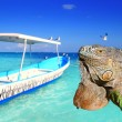 Mexican iguana in Caribbean tropical beach - Stock Photo