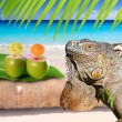 Mexico iguana in coconut Caribbean beach — Stock Photo