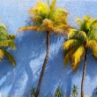 Coconut palm trees over blue wall sun shadows - Stock Photo