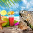 Stock Photo: Iguana on Mexico tropical beach cocktail coconut