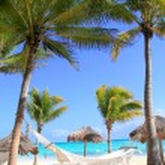 Caribbean beach hammock and palm trees — Stock Photo