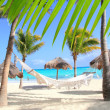 Stock Photo: Caribbean beach hammock and palm trees