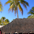 Caribbean hut red  house coconut palm trees — Foto de Stock