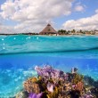 Stock Photo: Coral reef in MayRivierCancun Mexico