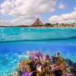 Coral reef in Mayan Riviera Cancun Mexico — Stock Photo