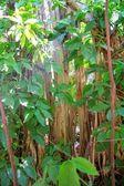 Rainforest jungle in central america — Stock Photo