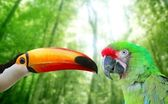 Toco toucan and Military Macaw Green parrot — Stock Photo