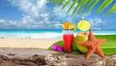 Coconut cocktail starfish tropical beach — Stok fotoğraf