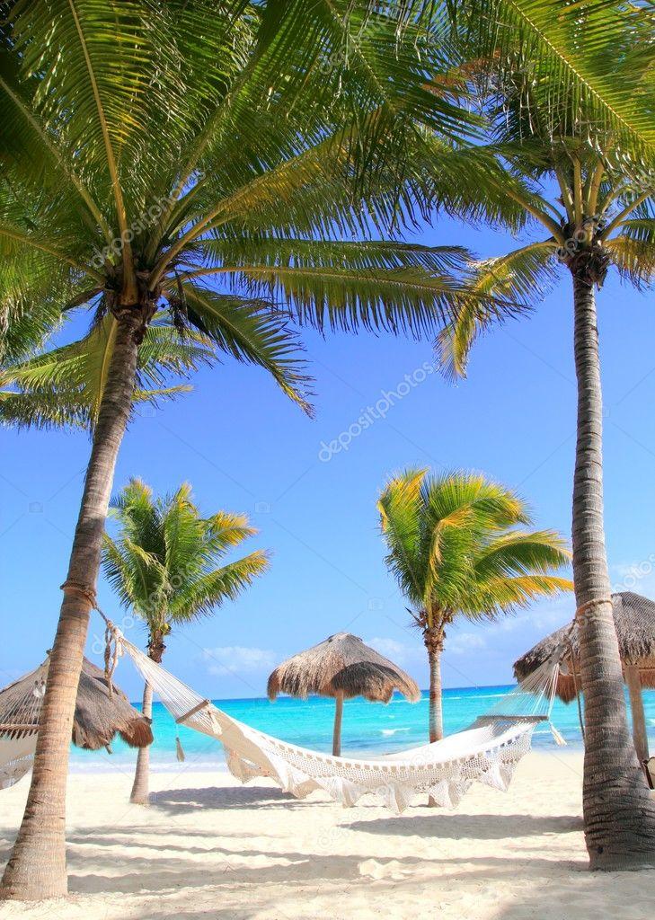 Caribbean Beach Hammock And Palm Trees Stock Photo