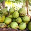 Fresh tender coconuts mound Caribbean Mexico — Stock Photo