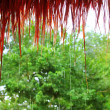 Jungle hut rain in rainforest water dropping detail — Stock Photo