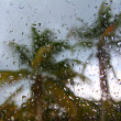 Hurricane tropical storm palm trees from inside car - Stock Photo