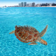 green sea turtle caribbean sea surface cancun — Stock Photo
