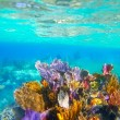 Mayan Riviera reef snorkel underwater coral paradise — Stock Photo