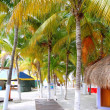 Isla Mujeres tropical North Beach Palm trees Mexico - Stock Photo