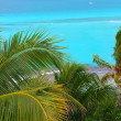 Caribbean turquoise sea coconut palm trees — Stock Photo #5283051