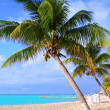 Caribbean North beach palm trees Isla Mujeres Mexico — Stock Photo #5283088