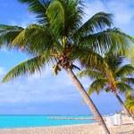 Caribbean North beach palm trees Isla Mujeres Mexico — Stock Photo
