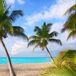 Caribbean North beach palm trees Isla Mujeres Mexico — Stock Photo
