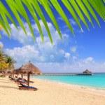 Mayan riviera beach palm rosnących szyberdach Karaibów — Zdjęcie stockowe #5283097