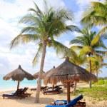 Ривьера Майя Бич пальмовых деревьев Люк Карибского бассейна — Стоковое фото